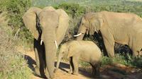 Safari im Kariega Wildreservat