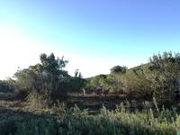 Kariega Wildreservat