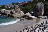 Boulders Beach - Pinguine