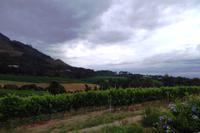 Weinregion Contantia