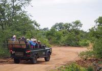 Pirschfahrt im Timbavati