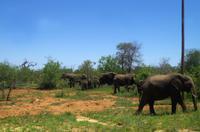 Fahrt vom Hoedspruit Eastgate Airport zur Simbavati River Lodge