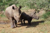 eSwatini - Mkhaya Wildreservat