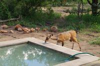 Südafrika - Simbavati River Lodge
