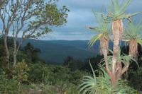 Mpumalanga - Misty Mountain