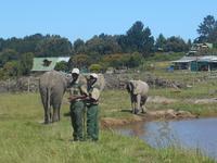 Knysna-Elefantenpark.