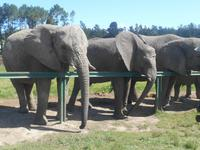 Knysna-Elefantenpark