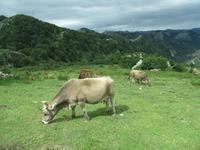 Covadonga (25)