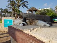 Genießer in Paphos